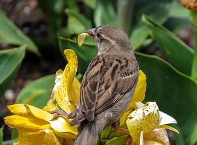 Canna Photograph - Sparrow by Zina Stromberg