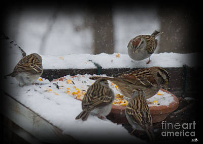 Photograph - Sparrows In The Snow Storm by Sandra Clark