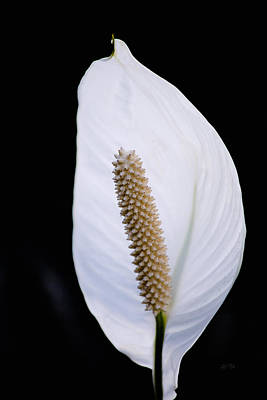 Houseplant Digital Art - Spathiphyllum Bloom by Eti Reid