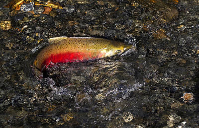 Photograph - Spawning Colors by Doug Lloyd