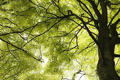 Photograph - Special Branch by Steven Poulton