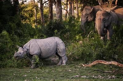 Rhino Wall Art - Photograph - Special Meeting by Pavol Stranak