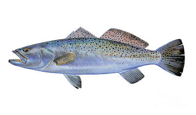 Pickerel Painting - Speckled Trout by Carey Chen