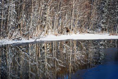 Spectacular Winter Moose Art Print