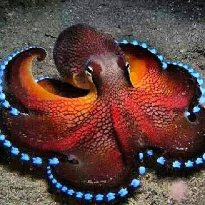 Octopus Wall Art - Photograph - Spectacularly Beautiful Lol I Would Be by Brandon Fisher