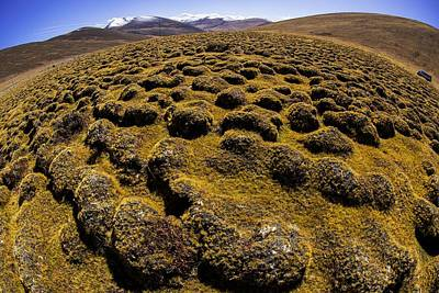Lichen Photograph - Speed Bumps by Aaron Bedell