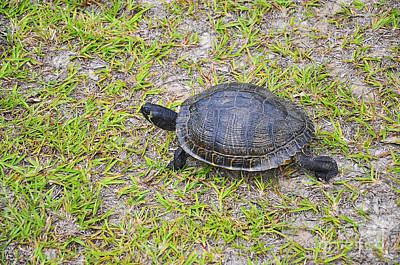 Pond Turtle Photograph - Speedy Slider by Al Powell Photography USA