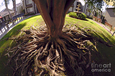 Photograph - Spherical Rooting by Clayton Bruster