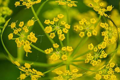 Flowers Photograph - Spherized Yellow Flowers by Robert Storost