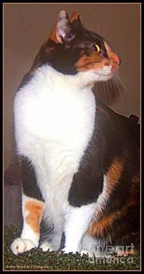 Photograph - Sphinx Kitty by Bobbee Rickard