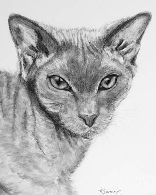 Drawing - Sphynx Cat Drawing by Kate Sumners