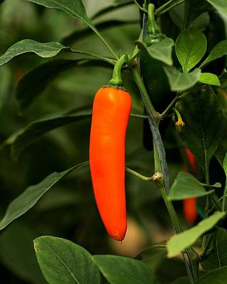 Photograph - Spicy Delight by Ramabhadran Thirupattur