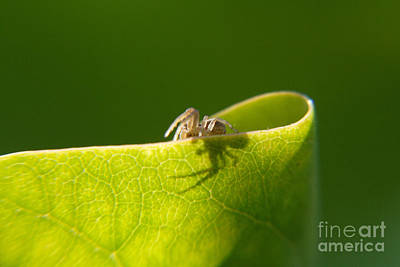 Photograph - Spider And Leaf by Art Photography
