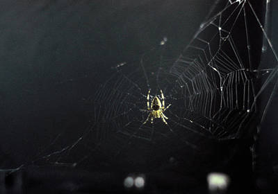 Astronautical Engineering Photograph - Spider And Web Woven In Zero Gravity by Nasa