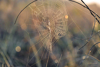 Photograph - Spider At Sunrise by Kay Lovingood