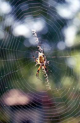 Photograph - Spider - Black And Yellow Argiope 05 by Pamela Critchlow