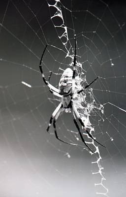 Photograph - Spider - Black And Yellow Argiope - Bw01 by Pamela Critchlow