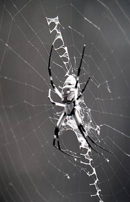 Photograph - Spider - Black And Yellow Argiope - Bw03 by Pamela Critchlow