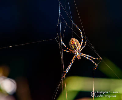 Photograph - Spider by Christopher Holmes