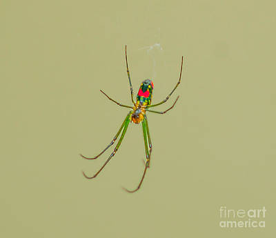 Photograph - Spider Crawl by Dale Powell