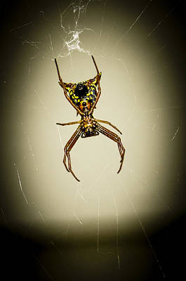 Photograph - Spider by Frank Winters