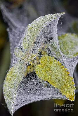 Spider Gossamer Silk Tent Art Print