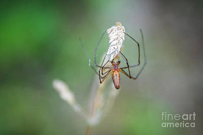 Photograph - Spider Grip by Grace Grogan