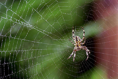 Photograph - Spider In A Misty Web by Gene Walls