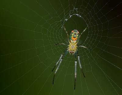 Photograph - Spider In Mexico by Brian Magnier
