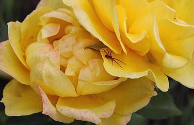 Spider In The Rose Garden Art Print by Ellen Tully