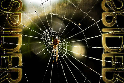 Spider In The Web Original by Tommytechno Sweden