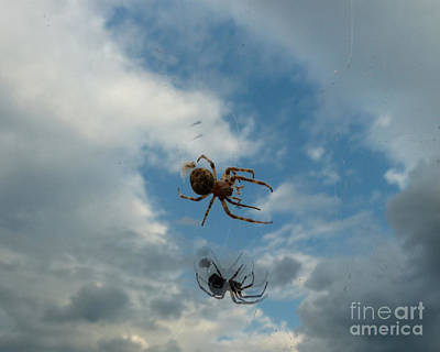 Art Print featuring the photograph Spider by Jane Ford