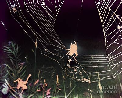 Photograph - Spider by Jennifer Kimberly