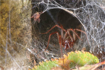 Photograph - Spider Lair by Martin Capek