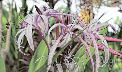 Photograph - Spider Lily In Pink by Peggy Hughes