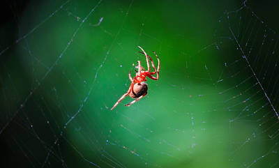 Photograph - Spider by Matthew Onheiber