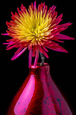 Chrysanthemums Photograph - Spider Mum In Red Vase by Garry Gay