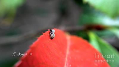 Spider On A Leaf Original by Phillip Rangel