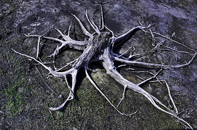 Art Print featuring the photograph Spider Roots At Manasquan Reservoir by Gary Slawsky