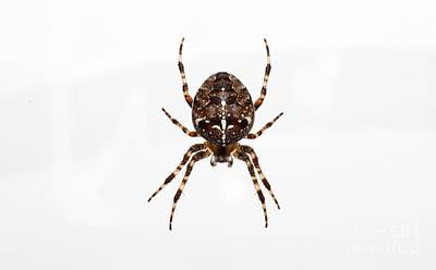 1-war Is Hell Royalty Free Images - Spider Royalty-Free Image by Shaun Wilkinson