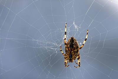 Digital Art - Spider by Steve Ball