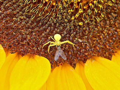 Photograph - Spider To The Fly by Kent Lorentzen