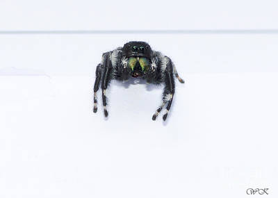 Photograph - Spider by Wanda Krack