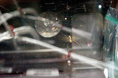 Golden Orb Photograph - Spider Weaving A Web In Space by Nasa