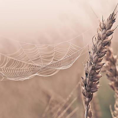 Colour Wall Art - Photograph - Spider Web by Aldona Pivoriene