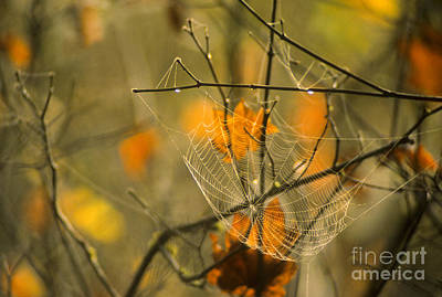Photograph - Spider Web And Autumn Leaves by Richard and Ellen Thane