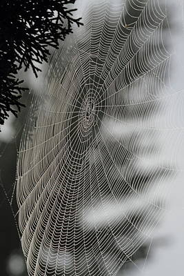 Vogel Wall Art - Photograph - Spider Web by Angie Vogel