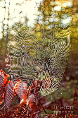 Condensation Photograph - Spider Web by Edward Fielding