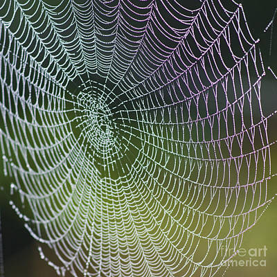 Abstract In Nature Photograph - Spider Web by Heiko Koehrer-Wagner