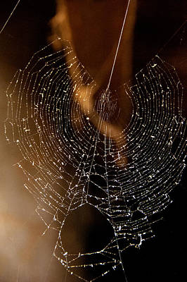 Photograph - Spider Web I by Patrick Boening